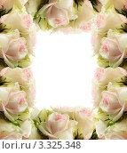 Рамка из роз. Стоковое фото, фотограф Алла Ушакова / Фотобанк Лори