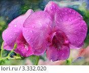 Роса на орхидеях. Стоковая иллюстрация, иллюстратор Евгения Молокеева / Фотобанк Лори
