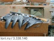 Купить «Охотничьи трофеи. Ружье и гуси», фото № 3338140, снято 3 октября 2010 г. (c) макаров виктор / Фотобанк Лори