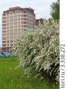 Цветущий белый куст на фоне городского дома (2011 год). Редакционное фото, фотограф UladzimiR / Фотобанк Лори