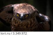 Сова. Стоковое фото, фотограф Андрей Самолинов / Фотобанк Лори