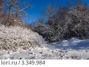 Дорога к Деду Морозу. Стоковое фото, фотограф Андрей Самолинов / Фотобанк Лори