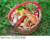 Купить «Корзина с грибами», эксклюзивное фото № 3353832, снято 29 июля 2008 г. (c) Алёшина Оксана / Фотобанк Лори