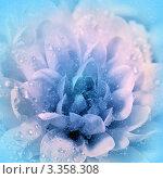 Купить «Цветок хризантема в сиренево-голубом тоне с каплями воды», фото № 3358308, снято 3 марта 2012 г. (c) ElenArt / Фотобанк Лори