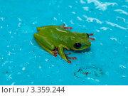Лягушка. Стоковое фото, фотограф Топонарь  Иван / Фотобанк Лори