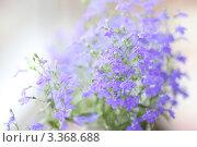 Купить «Лобелия ампельная», фото № 3368688, снято 29 июня 2011 г. (c) Мария Николаева / Фотобанк Лори