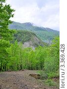 Купить «Весенний лес в окрестностях аула Тхагапш», фото № 3369428, снято 6 мая 2011 г. (c) Анна Мартынова / Фотобанк Лори