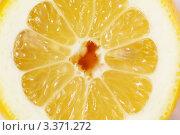 Купить «Сочный свежий лимон», фото № 3371272, снято 22 марта 2012 г. (c) Алексей Голованов / Фотобанк Лори