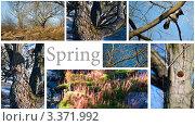 Весна. Стоковое фото, фотограф Сергей Высоцкий / Фотобанк Лори