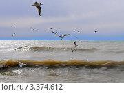 Купить «Чёрное море», эксклюзивное фото № 3374612, снято 15 марта 2012 г. (c) Юрий Морозов / Фотобанк Лори