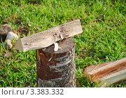 Купить «Дрова на растопку», эксклюзивное фото № 3383332, снято 9 июля 2011 г. (c) Алёшина Оксана / Фотобанк Лори