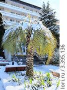 Купить «Пальма, занесенная снегом», эксклюзивное фото № 3395136, снято 8 марта 2012 г. (c) Юрий Морозов / Фотобанк Лори