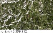 Купить «Хвойное дерево в снегопад», видеоролик № 3399912, снято 26 марта 2012 г. (c) Петр Малышев / Фотобанк Лори