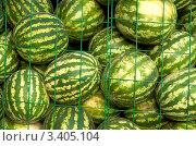 Купить «Арбузы за решеткой», фото № 3405104, снято 6 августа 2005 г. (c) Vesna / Фотобанк Лори