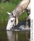 Лошадь в воде. Стоковое фото, фотограф Ворошилова Анна / Фотобанк Лори