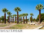 Купить «Пальмы, Памуккале, Турция», фото № 3410628, снято 17 сентября 2009 г. (c) ElenArt / Фотобанк Лори