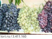 Виноград трех сортов. Стоковое фото, фотограф Анвар Умаров / Фотобанк Лори