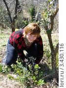 Купить «Дачница размножает фейхоа черенкованием», эксклюзивное фото № 3430116, снято 1 апреля 2012 г. (c) Анна Мартынова / Фотобанк Лори