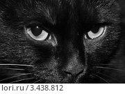 Купить «Кот», фото № 3438812, снято 14 мая 2009 г. (c) Анастасия Шипилова / Фотобанк Лори