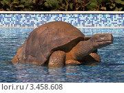 Купить «Скульптура черепахи», эксклюзивное фото № 3458608, снято 19 августа 2011 г. (c) Журавлев Андрей / Фотобанк Лори