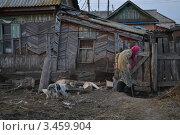 Бабушка с единственным другом идет домой (2012 год). Редакционное фото, фотограф Ахметзянов тимур / Фотобанк Лори