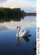 Белый лебедь. Стоковое фото, фотограф Юрий Кузовлев / Фотобанк Лори