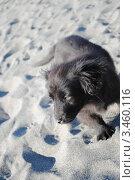 Купить «Щенок на пляже», фото № 3460116, снято 3 марта 2012 г. (c) Шейнина Ольга / Фотобанк Лори