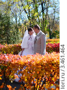Купить «Жених и невеста гуляют по осенней аллее», фото № 3461464, снято 23 октября 2010 г. (c) Арестов Андрей Павлович / Фотобанк Лори