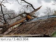 Купить «Удар судьбы - раздавленная крыша дома поваленным деревом», фото № 3463904, снято 21 апреля 2012 г. (c) Fro / Фотобанк Лори