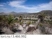 Купить «Пальмы в пустыне», фото № 3466992, снято 22 апреля 2012 г. (c) Ludenya Vera / Фотобанк Лори