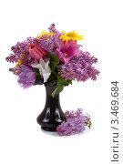 Букет сирени и тюльпанов в вазе. Стоковое фото, фотограф Елена Блохина / Фотобанк Лори