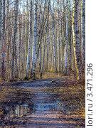 Размытая дождем дорога в весенней березовой роще. Стоковое фото, фотограф Владимир Арефьев / Фотобанк Лори