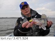 Рыба (берш) в руках рыбака. Фокус на рыбе. Стоковое фото, фотограф Алексей Попов / Фотобанк Лори