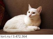 Белая кошка. Стоковое фото, фотограф Клыкова Инна / Фотобанк Лори