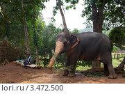 Купить «Индийский слон», эксклюзивное фото № 3472500, снято 21 апреля 2012 г. (c) Яна Королёва / Фотобанк Лори