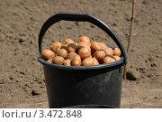 Ведро картофеля. Стоковое фото, фотограф Игорь Ткачёв / Фотобанк Лори