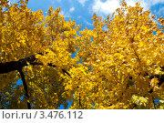 Осенние деревья. Стоковое фото, фотограф Станислав Малиновский / Фотобанк Лори