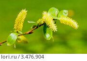 Купить «Весна,  солнечный день», фото № 3476904, снято 29 апреля 2012 г. (c) Екатерина Овсянникова / Фотобанк Лори