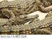 Купить «Крокодилы отдыхают», фото № 3487524, снято 23 апреля 2012 г. (c) Наталья Волкова / Фотобанк Лори