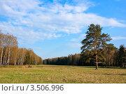 Купить «Весенний лесной пейзаж в Павловском парке», фото № 3506996, снято 6 мая 2012 г. (c) Иванова Марина / Фотобанк Лори