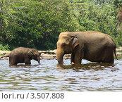 Купить «Слоны», фото № 3507808, снято 26 февраля 2012 г. (c) Лия Покровская / Фотобанк Лори