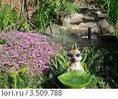 Купить «Статуи в саду у фонтана», фото № 3509788, снято 24 марта 2012 г. (c) Тарасова Татьяна / Фотобанк Лори