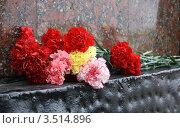 Гвоздики. Стоковое фото, фотограф Яблонских Татьяна / Фотобанк Лори