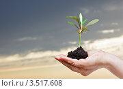 Росток в руке на фоне неба. Стоковое фото, фотограф Григорьев Владимир / Фотобанк Лори
