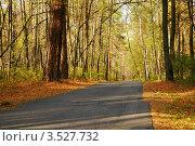 Асфальтированная дорога в осеннем лесу. Стоковое фото, фотограф Светлана Полушкина / Фотобанк Лори