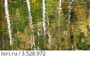 Купить «Отражение осеннего парка в воде пруда», видеоролик № 3528972, снято 8 октября 2008 г. (c) Losevsky Pavel / Фотобанк Лори