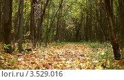 Купить «Опавшие листья в осеннем лесу», видеоролик № 3529016, снято 16 октября 2008 г. (c) Losevsky Pavel / Фотобанк Лори