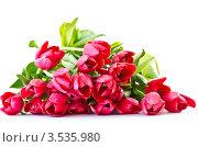 Букет тюльпанов. Стоковое фото, фотограф Peredniankina / Фотобанк Лори