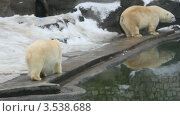 Купить «Белые медведи в зоопарке», видеоролик № 3538688, снято 11 февраля 2009 г. (c) Losevsky Pavel / Фотобанк Лори