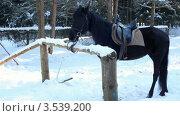 Купить «Вороной конь», видеоролик № 3539200, снято 18 апреля 2009 г. (c) Losevsky Pavel / Фотобанк Лори
